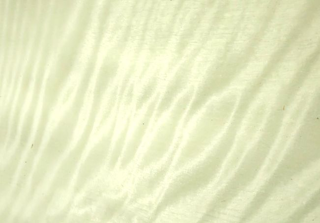 сикамор арктический