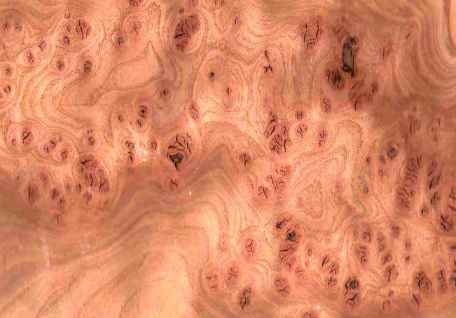 Корень вяз (ильм) шпон